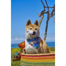 HIRO + WOLF Wizard of Dog Dog Bandana
