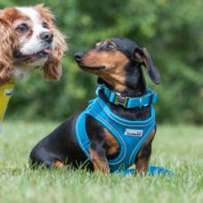Doodlebone Airmesh Snappy Dog Harness