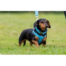 Doodlebone Bold Padded Dog Harness